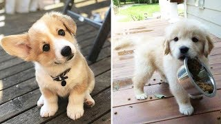 Download ♥Cute Puppies Doing Funny Things 2019♥ #10 Cutest Dogs Video