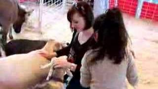 Download petting zoo goats Video