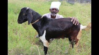 Download Ramzan Special Mutton BRIYANI Prepared my DADDY / Village Food Factory Video