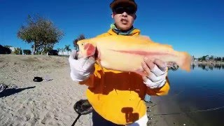Download Santa Ana River Lakes - Nice Lightning Trout on The Fishing Caddy Video
