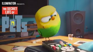 Download The Secret Life of Pets - Meet Sweet Pea (HD) - Illumination Video