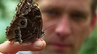 Download BBC Искусство перевоплощения метаморфоз Video