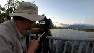 Download 20180805【839】MIT台灣誌 八月濕地守時的滿天飛燕 觀音山麓 五股當令御筍發 Video