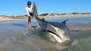 Download Shark fishing-GREAT WHITE SHARK CATCH-Monster Bull Shark HD Video