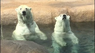 Download 20180721:今日の円山動物園 Video
