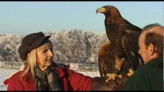 Download Orla the Golden Eagle 2010 Video