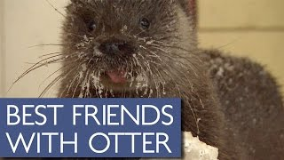 Download Elderly Man Has Adorable Friendship With Wild Otter Video
