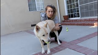 Download CELEBRATING OUR DOG'S FIRST BIRTHDAY!! Video