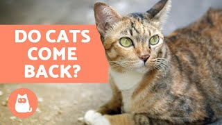 Download Do Cats Come Back Home If They Run Away? Video
