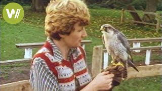 Download Training birds of prey in the 80's - How hunting with predatory birds looked like Video