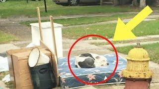 Download This Dog's Family Moved And Left Him On The Curb. Weeks Later, He Was Still Waiting For Their Return Video