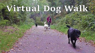 Download TV for Dogs : Calming Dog Walking TV - Virtual Woodland Walk Video