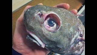 Download Strangest Creatures Found in the Water Video