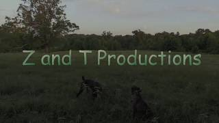 Download Coyote Hunting-HOT JULY DOGGIn HIGH Stamina Coyote!! Video