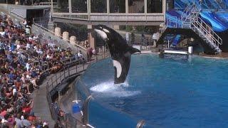 SeaWorld: Tilikum, orca that killed trainer, has died Free Download