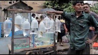 Download Kolkata Fish Market by Subrata Giri Video