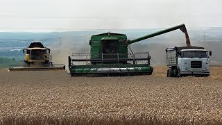 Download Žně 2018 - Sklizeň ozimé pšenice  Podorlické ZD Ohnišov  //Full HD// *50fps* ORIGINAL SOUND Video