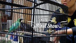 Download DUNIA HOBI : HERVI SHOW Part 2 - Mandi Bareng Cucak Ijo Gacor Video