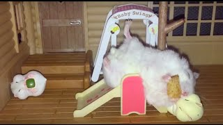 Download These Happy Hamsters love attending Hamstergarten school! Video