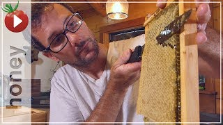 Download Honey Harvest - Spinning Out 4 Gallons of Honey! Video