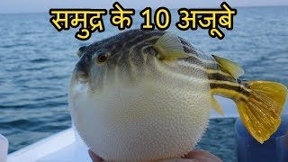 Download समुद्र के १० विचित्र और भयानक मछलियां 10 Creepy Sea Fishes You Didn't Know Existed Video