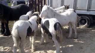 Download Stow Horse Fair 2013. Stow in the Wold. England Video
