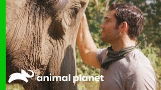 Download Evan Shares Heartfelt Encounter with a Gentle Elephant | Evan Goes Wild Video