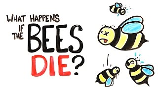 Download What Happens If All The Bees Die? Video