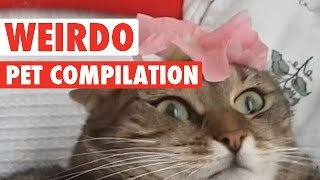 Download Animals Being Weirdos || Biggest Weirdo Pets Video