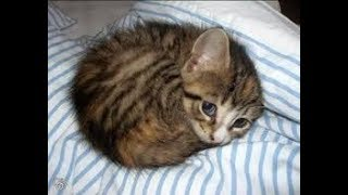 Download Found a kitten behind my house !!! Video