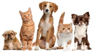 Download PetShop Mundo Animal Video