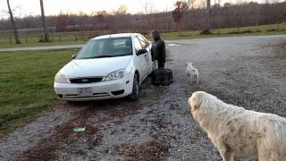 Download Scared my dog trying to scare my friend Video