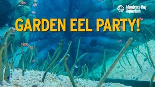 Download Our Garden Eels Know How To Party! Video