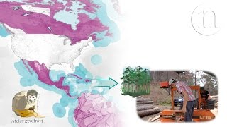 Download The trade routes that threaten biodiversity Video