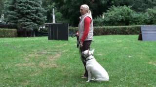 Download Prüfung zum Wiener Hundeführschein Video