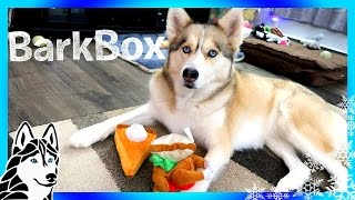 Download ALL THE TOYS BELONG TO SHELBY | Thanksgiving Bark Box Unboxing with Dog Commentary Video