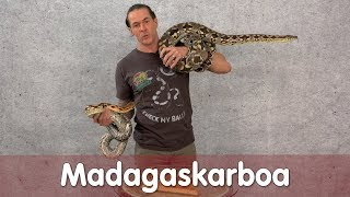 Download Reptil TV - Praxis - Madagaskarboa Video