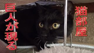 Download 巨人が猫部屋にやってきた【瀬戸黒猫日記】 Video