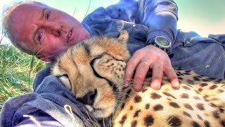 Download Taking A Nap With Loving Female Cheetah - Cat Cuddles & falls Asleep In Man's Arms -Needs Baby Binky Video