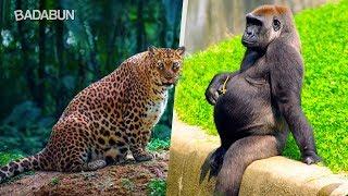 Download Así lucen estos 15 animales antes de dar a luz Video