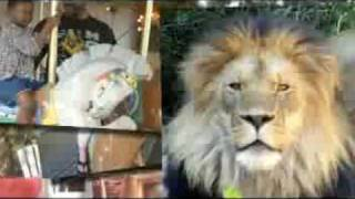 Download History of Cheyenne Mountain Zoo Video