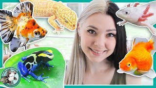 Download All My Pets in One Video! Video