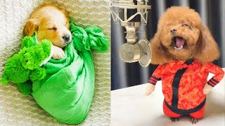 Download Baby Dogs - Cute and Funny Dog Videos Compilation #14   Aww Animals Video