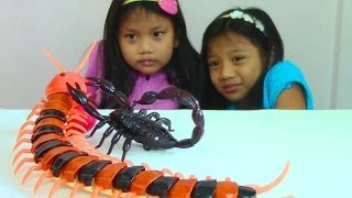 Download Innovation Scorpion and Giant Scolopendra Creepy Crawlers Toys Video