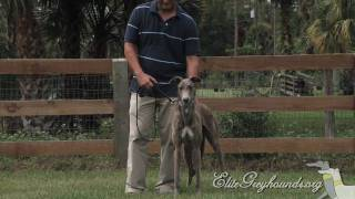 Download Greyhounds for families with kids! Video