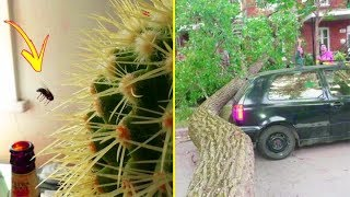 Download Things That Happen Once In A Lifetime 「 funny photos 」 Video