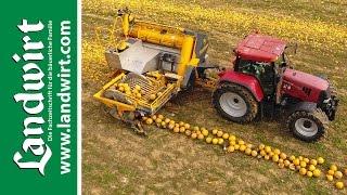 Download Agro-Stahl Phönix Kürbiserntemaschine | landwirt Video