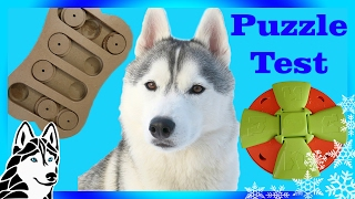 Download Testing My Dog's intelligence | Puzzle Test Challenge | DOG IQ Test | w/ Gohan the Husky Video