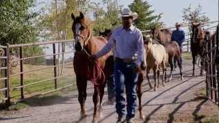Download Montana Horse Ranch - America's Heartland Video