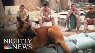 Download 'He Saved My Life': Vet with PTSD Reunited with Dog Four Years Later | NBC Nightly News Video